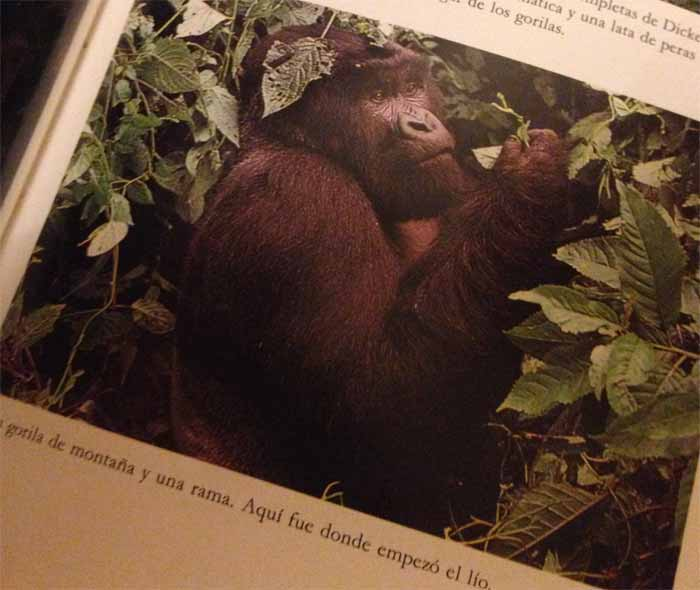 Douglas Adams gorila Maldita Cultura Magazine