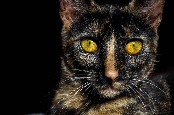 Tesoros ocultos: Azahara Siroco